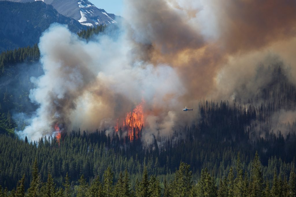 Forest fires release CO2 into the atmosphere