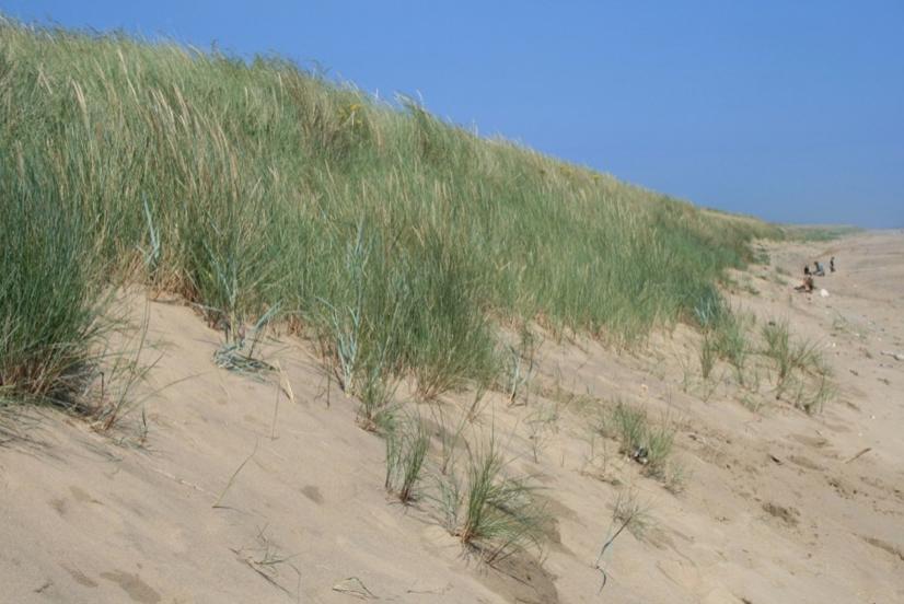Sand dunes on Spurn Point